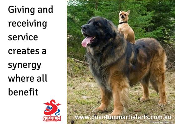 Service - Big Dog
